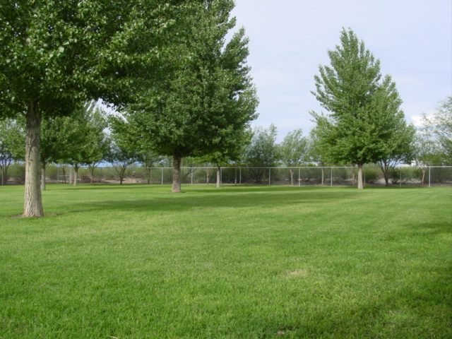 Our large fenced and secured yard for the dogs.