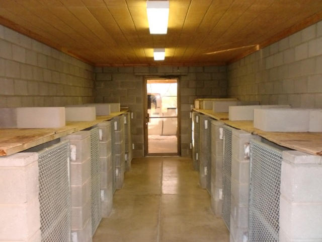 Inside view of our dog kennels